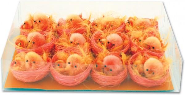 Küken im Nest orange